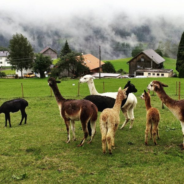 Bambini und Carlo sind zurück aus ihrem dreiwöchigen Urlaub in Doren. Jetzt heißt ...