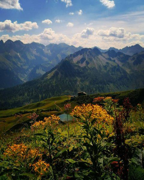 💮🍁 Der Herbst ist ein zweiter Frühling, wo jedes Blatt zur Blüte wird. 🍂🏵️ . . #allgäu...