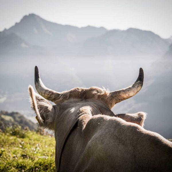 . . . #bregenzerwald #livefolk #theglobewanderer #liveauthentic #artofvisuals #view #majestic_earth #welivetoexplore #alpen #kuh ...