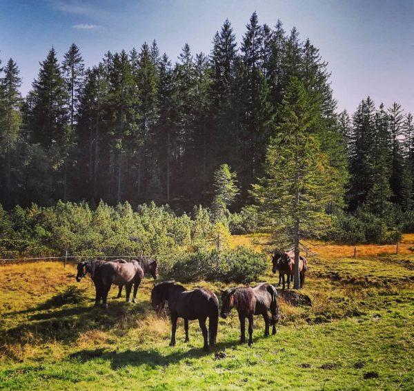 #hochhäderich #hittisau #riefensberg #bregenzerwald #vorarlberg #austria #nature #landscape #trees #horses #autumniscoming #home #paradise ...