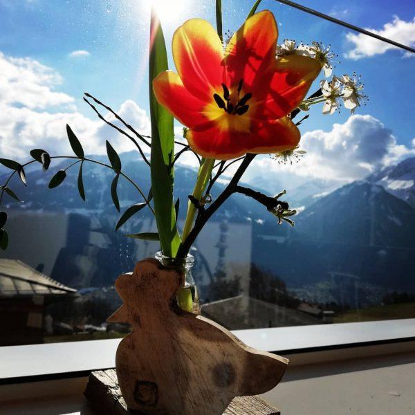Frühling😉 #spring #sunnyday #fower #skiing🎿 #bluesky💙 #amazing #easter #holiday #skyline #hotelbergerhof #heimatliebe #meinmontafon ...