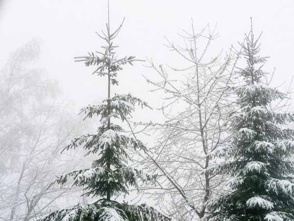 winterwonderland. #rickatschwende #vorarlberg