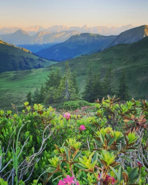 N A T U R 🌲🤫🌷 #alpenrosen #berge #wiesen #ausblick #luft #einatmen #unberührt ...