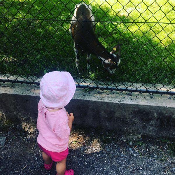 Wildpark Feldkirch 😍 #alltagmitbaby #februarbaby2018 #babyblog #babyblogger_de #baby #babygirl #papasprinzesin #familie #mamablogger_de #lebenmitkind ...
