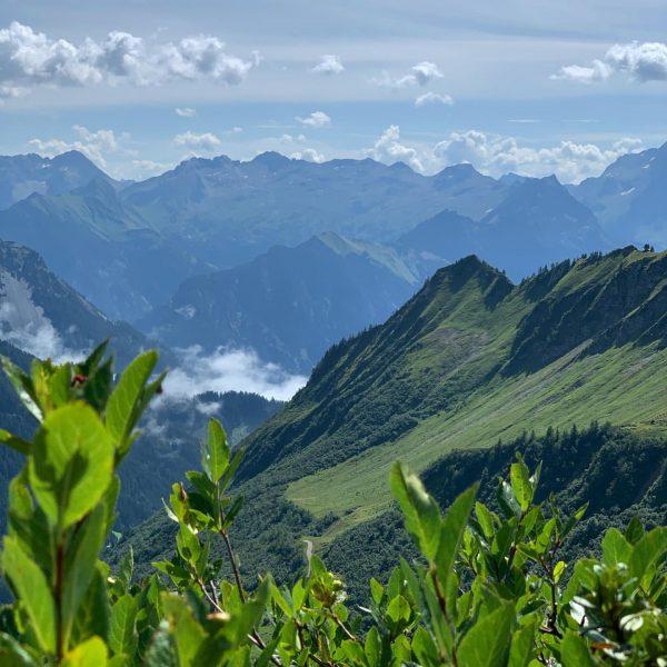 Auf dem herrlichen Blumenpfad 🌱 in Faschina 🇦🇹 auf dem Abstieg vom Glatthorn ...