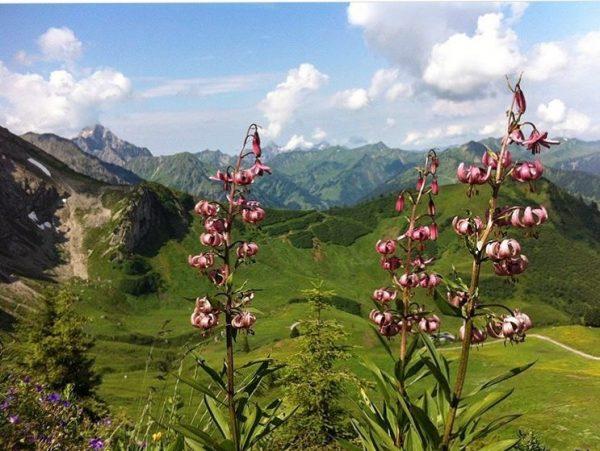 'Durch die Blume gesagt'...Blick Richtung Kuhgehrenspitze 🌿⛰ . . #kuhgehrenspitze #kuhgehren #kanzelwand #fellhorn #allgäu #allgaeu #kleinwalsertal #kleinwalsertaltravel...