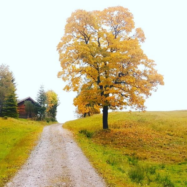 #autumn #nature #photography #landscape #naturephotography #sunday #hiking #holiday #vorarlberg #austria #visitvorarlberg #visitaustria #laendlepics ...