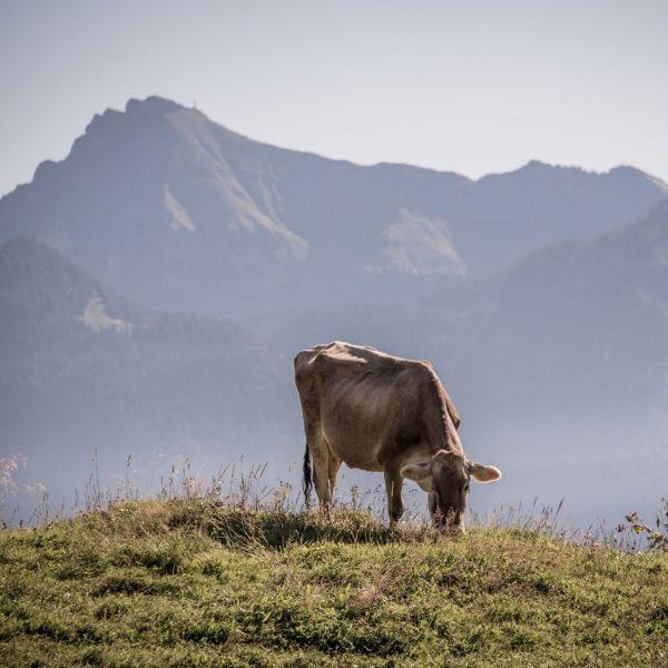 Charakterstarke Landschaften und eine grandiose alpine Natur #tempel74 #urlaubsapartments #mellau #bregenzerwald #vorarlberg #austria ...