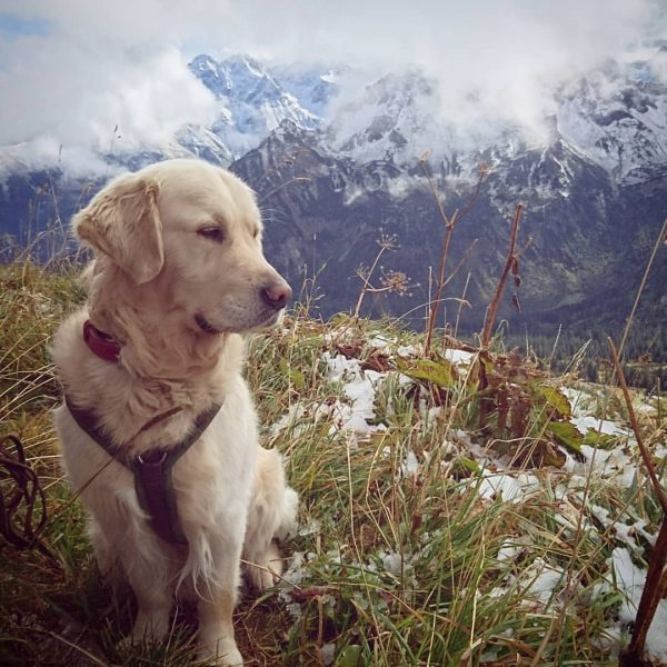 I can't get enough of it 🐾🗻🌿 #goldenretriever#goldenretrieversofinstagram#dog #life #nature #beautiful #outdoor #hiking #incredible #special #extraordinary #insta...