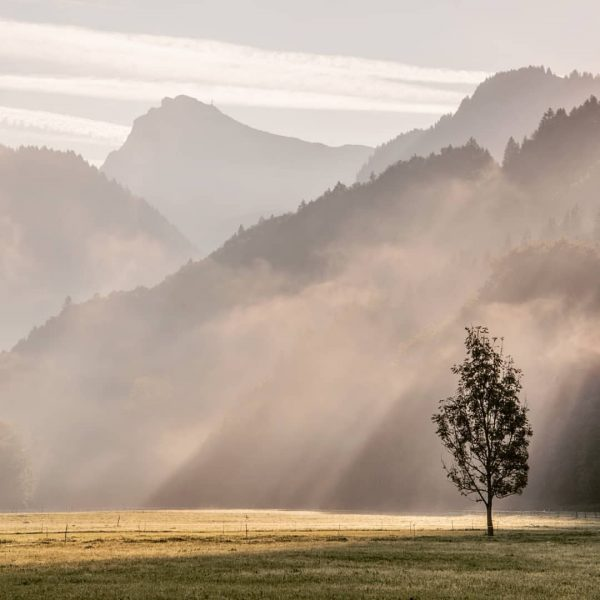 . . . #bregenzerwald #livefolk #theglobewanderer #liveauthentic #artofvisuals #sun #majestic_earth #welivetoexplore #tempel74 #morning ...