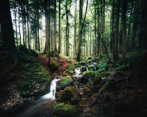 Waldspaziergang... raschelndes Laub. Duftendes Moos. Tanzende Schmetterlinge. Eine erste Ahnung vom Herbst. 🍁🍂🦋 ...