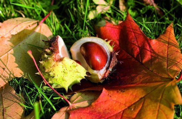 Der Herbst ist immer unsere beste Zeit. - Johann Wolfgang von Goethe 🍂☀️ ...