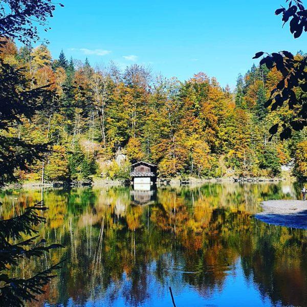 #staufensee #stausee #rappenlochbrücke #dornbirn #vorarlberg #österreich #austria #treestagram #view #landscape #ilovetrees #forest #sun ...