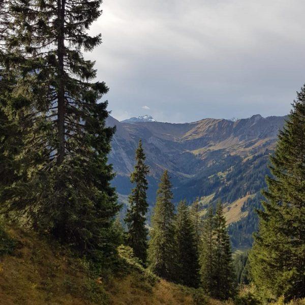 Heute sind wir vom Walmendinger Horn nach Mittelberg gewandert! 😍🔝 es ist nie ...