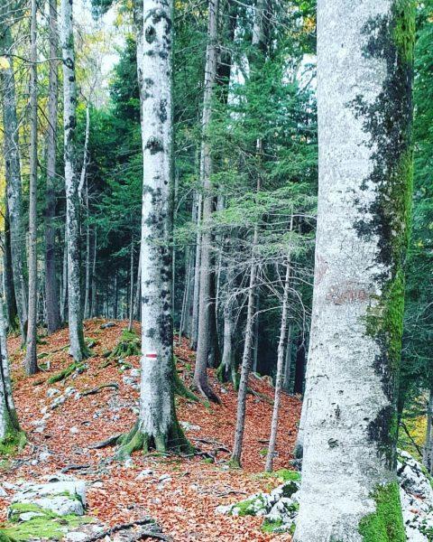 #kanisfluh #wanderung #herbst Schnepfau, Vorarlberg, Austria