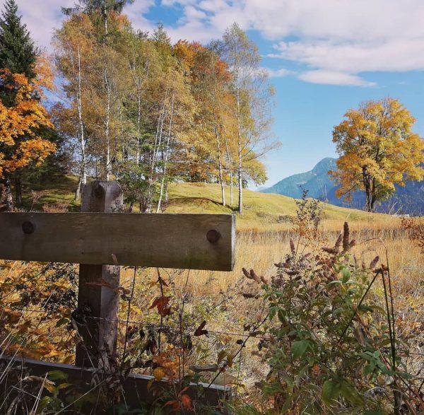 Jahr für Jahr die schönste Zeit... ☀️🍁 #tschengla #bürserberg #herbst #autumn #austria #ländle ...