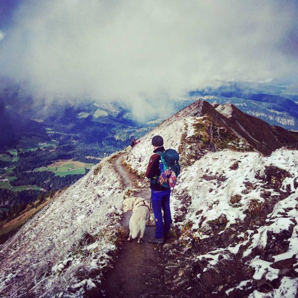 We miss it.. 🐾🗻 #goldenretriever #goldenretrieversofinstagram#dog #memories #throwback #allgäu #bavaria #travel #hiking #mountains #peak #snow #stunning #view...