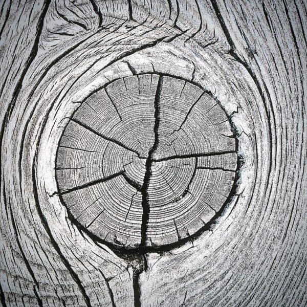I 💚 Holz. #ichundmeinholz #holz #ast #astloch #rissig #sonnengebleicht #windundwetter #nature #werkstoff #kau ...