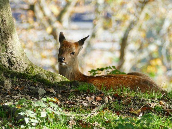 Oooh.. 😍 #sika #sikahirsch #sikadeer #deer #wildparkfeldkirch Wildpark-Feldkirch