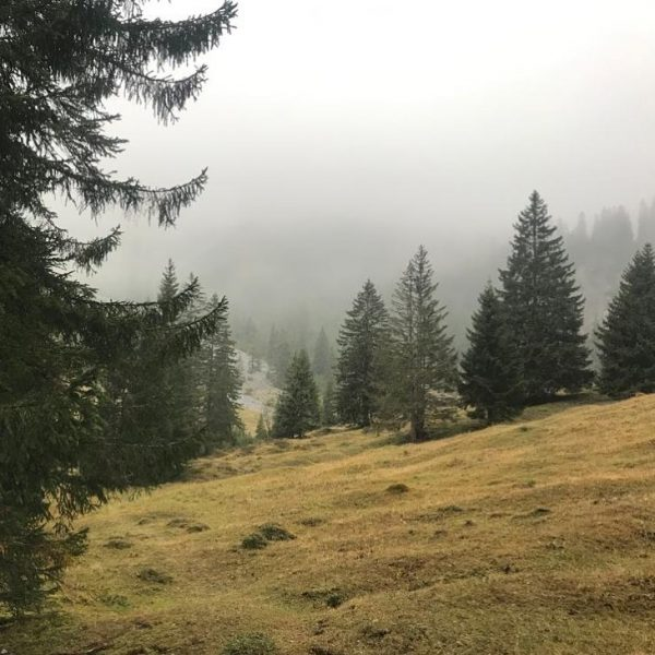 Auch wenn es heute bewölkt ist☁️ und der Nebel etwas tiefer hängt, genießen ...