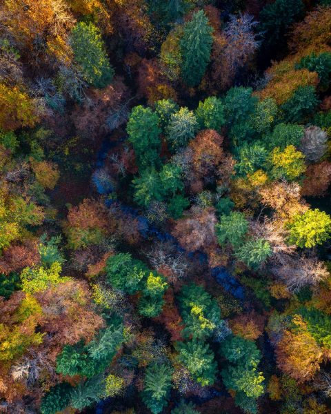 #autumn #fromabove #alberschwende #vorarlberg #drone #dronephotography #hqnature #ig_nature_naturally #nature_worldwide_trees #world_inside #fascinatingwanderlustpics #super_passport #ourplanetdaily ...