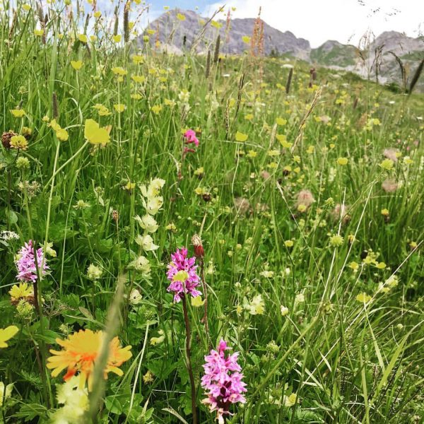Flowers 🌺 🌸🌷🌻 #arlberg #wanderlust #hiking #gipslöcher @gasthof_hotel_rotewand @best.mountain.artists Gipslöcher