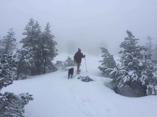 #schneeschuhwanderung im #fohramoos auf dem #bödele #bregenzerwald #vorarlberg #visitaustria #labrador