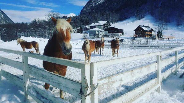 """The way to heaven is on horseback"" #horselovers #pferdestall #pferdefotografie #reitenmachtglücklich Sporthotel Beck"