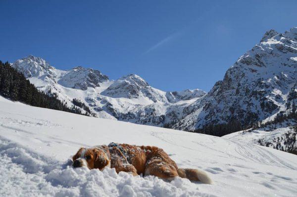 #joschi #bernhardiner #bernersennenhund #Österreich #Kleinwalsertal #wildental #schafalpenköpfe #welpen #winter #schnee #schönstezeitdesjahres #sonne #liebe ...