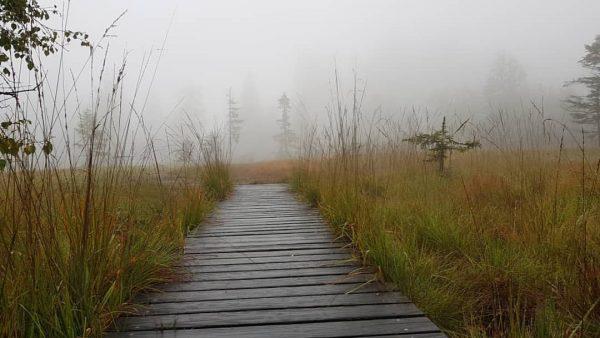 Es #herbstelt am #bödele in #schwarzenberg 🍂 #1september #herbst #fohramoos #4jahreszeiten #naturschutzgebiet #bödele ...