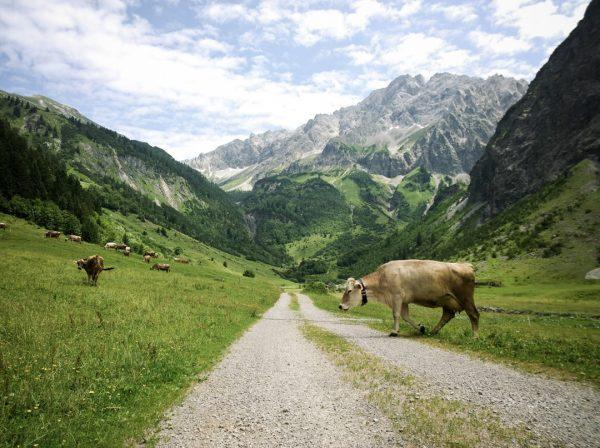 Achtung Fußgänger #grosseswalsertal #biospährenpark #badrothenbrunnen #throwback #alpenregion #visitvorarlberg #visitaustria #hiking #alps #alpstraveller #austrianalps ...