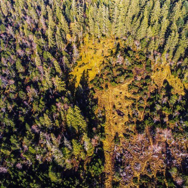 #bödele #dornbirn #vorarlberg #nature #lake #heart #fohramoos #autumn #herbst #drone #dronephotography #sky #forest ...