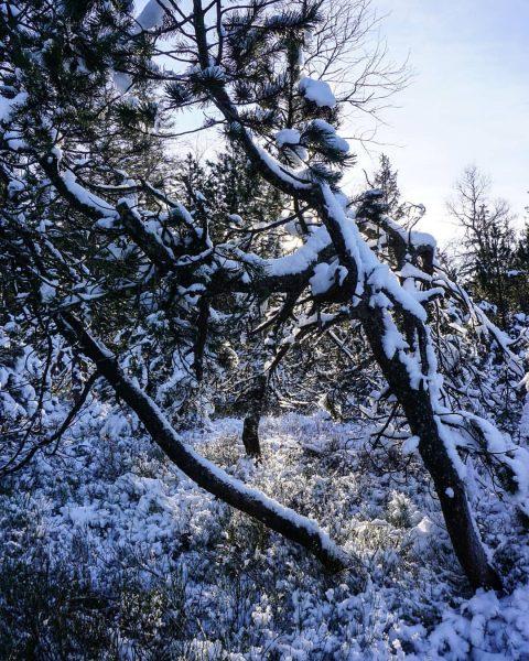 Fohramoos ❄ #bödele #visitbregenzerwald #discoverearth #mounatins #beautifuldestinations #bewild #alpensucht #feelthealps #mountainlovers #welcomenature #theglobalwanderer ...