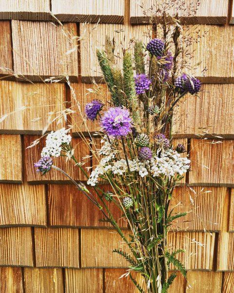 Ein spezieller Gruß an die @stadtblume_wien 🌿🌾😘 #teufelsabbiss #pfeifengras #wiesenblumen #blumen #blumenstrauß #flora ...