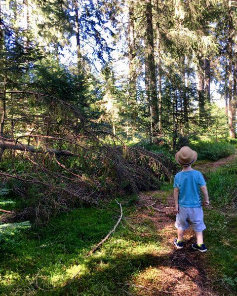Kleiner Waldschrat #wald #hütte #hüttenurlaub #hüttenliebe #urlaubindenbergen #waldspaziergang #bödele #fohramoos #dornbirn #vorarlberg Bödele