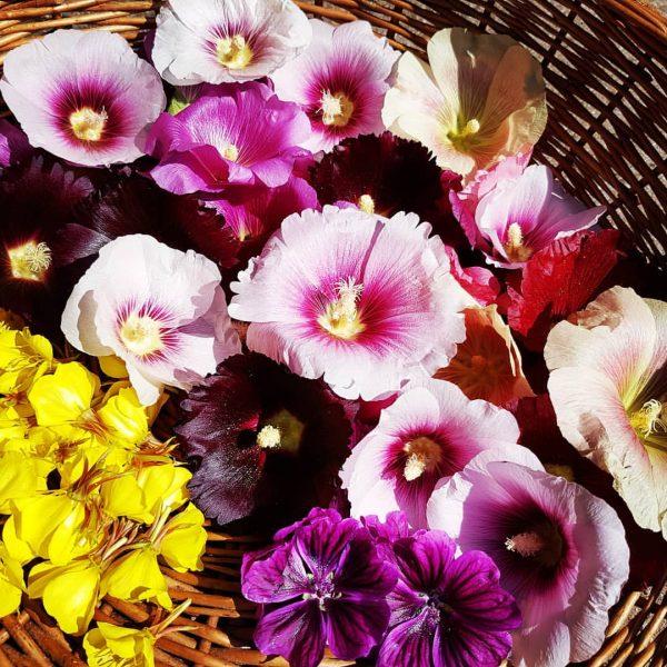 Nächste Runde! Noch ein Korb voll Blüten 🤗 #kräuterhexe #kräuter #blüten #tee #trocknen ...