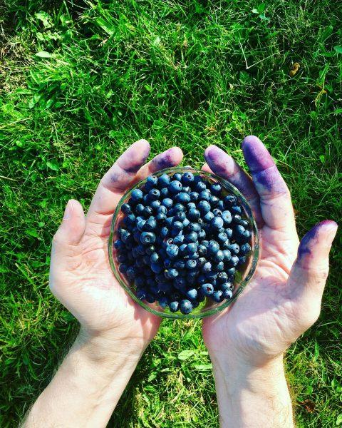 Grundnahrungsmittel hier #heidelbeeren #blueberries #ausbeutedestages #waskocheichheute #waldspaziergang #wald #natur #fohramoos #bödele #dornbirn #vorarlberg