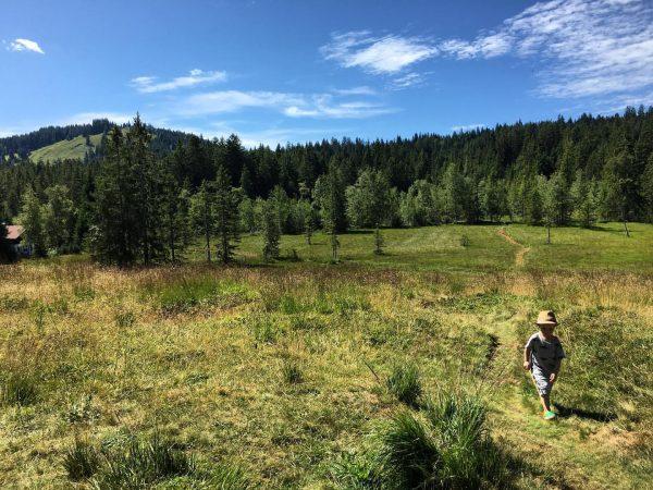 Wald- und Wiesenkind 🌳🌿🌲 #thegreatoutdoors #draußen #europaschutzgebiet #natura2000 #hochmoor #wiese #outdoorfun #spaziergang #toddler ...