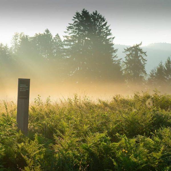Krumbacher Moore: Ein Gewinn für die Seele und das Klima. Vorarlberg sucht seinen ...