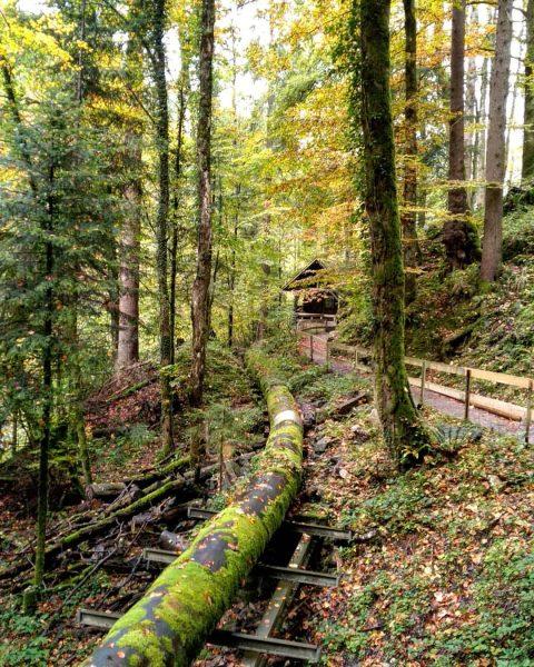 Austrian fairytale forest #austria #autumn #fall #forest #rappenlochschlucht #австрия #дорнбирн #лес #осень #travel ...