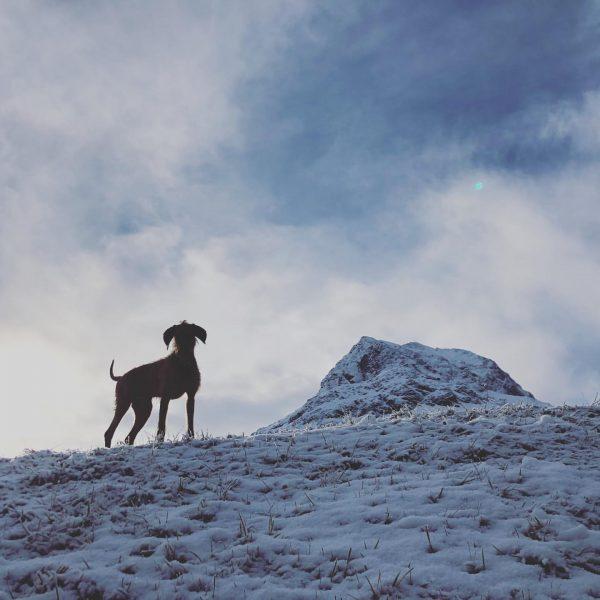 Schaut schon etwas nach Winter aus...Roka freut sich über den ersten Schnee!! #auroralech ...