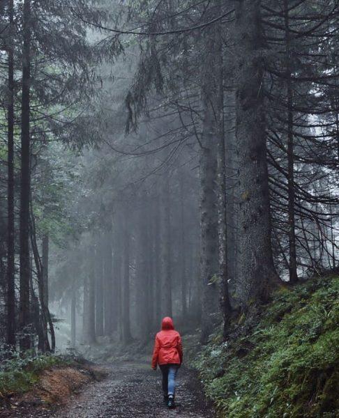 Moody forest hikes 📸 by @katrinsseelenbilder #visitbregenzerwald #bregenzerwald #vorarlberg #austria #forest #mountains #autumn ...