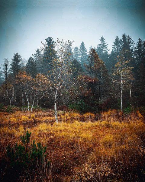 Beim Moorsee in Sulzberg 🍂 🇦🇹 #Sulzberg #herbst #wald #autumn #autumnvibes🍁 #sulzbergmoor #wälder ...