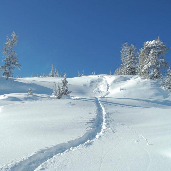 Übers Wochenende soll bei uns jede Menge Schnee fallen! Wir können es kaum ...