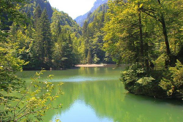 Staufensee, near Dornbirn #lake #lakephotography #mountainlake #landscape #landscapephotography #forest #forestphotography #lakeforest #green #summer ...