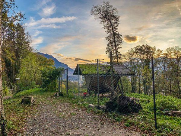 #shotoniphone #wildparkfeldkirch #wildpark #vorarlberg #feldkirch Wildpark-Feldkirch