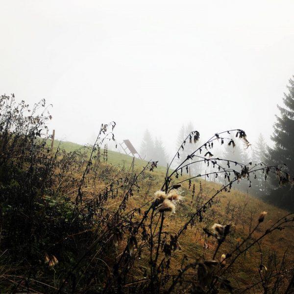 Der Nebel versteckt im moment die Berge.🏔 ———————————————————— Wir haben trotzdem ein Kunstwerk ...