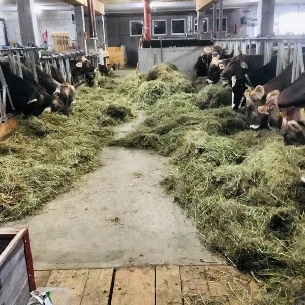 """""""Landwirtschaft in Hittisau"""" Die Heumilchkühe unserer Milchlieferanten 👩🌾🥛 leben ausschließlich auf familiengeführten Bauernhöfen ..."""