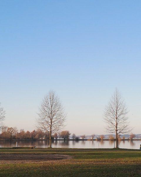 Dezember... #hardambodensee #visitvorarlberg #bodensee #wasser #dezember #Bäume #silence #sonne #sun #juwel #stedepark #funkenwiese ...