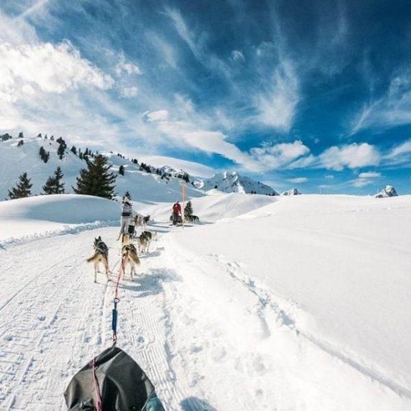 Spontane WinterIDEEN 💡 . HEUTE: Die #Schlittenhundfahrt . Entspannt durch die Gegend gleiten ...